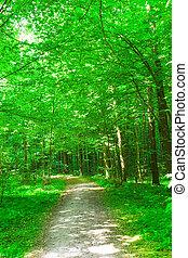 Naturaleza. Bosque en verano