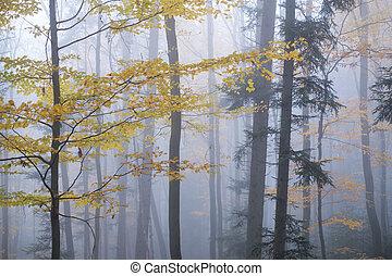niebla, bosque, misterioso, oscuridad, haya