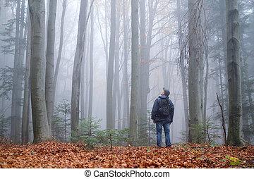 niebla, oscuridad, misterioso, bosque, hombre, haya
