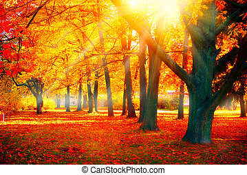 Otoño. Escena de otoño. Hermoso parque otoñal