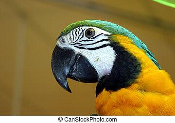 Pájaros número uno