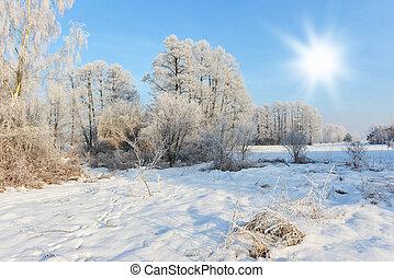 Paisaje de invierno