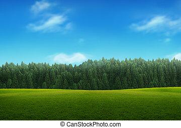 Paisaje de jovenes bosques verdes con cielo azul