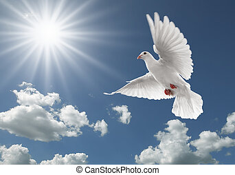 Paloma en el cielo