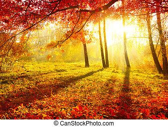 Parque de otoño. Árboles de otoño y hojas.