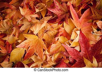 Patas en otoño