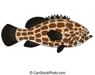 pez, grouper
