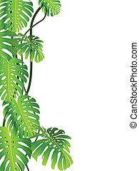 planta tropical, plano de fondo