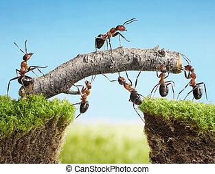 puente, trabajo en equipo, construir, hormigas, equipo