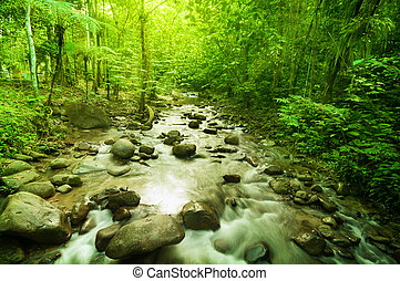 Río en la selva