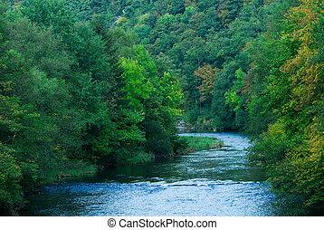 Río y bosque verde