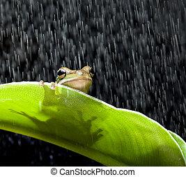 Rana bajo la lluvia