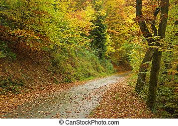 Rastreo en el bosque de otoño 01