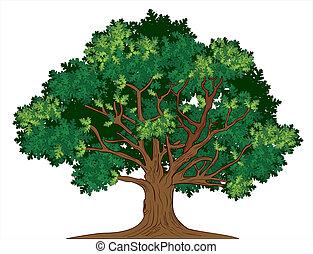 roble, vector, árbol