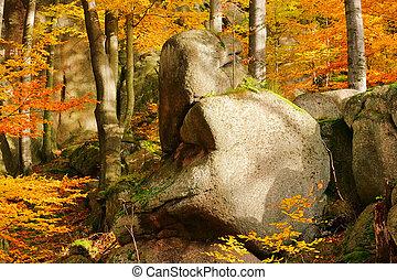 Roca en el bosque 01