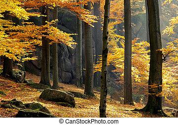 Roca en el bosque
