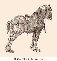 saddle., caballo