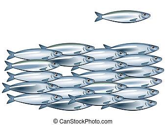 sardina, bajío