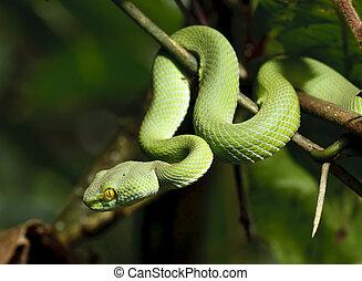 Serpiente verde en bosque tropical