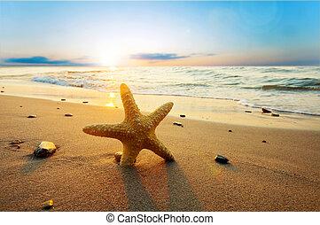 Starfish en la soleada playa de verano