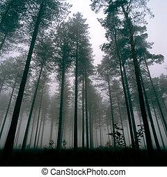thetford, bosque, árboles