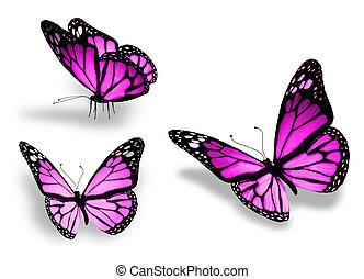 tres, aislado, plano de fondo, violeta, blanco, mariposa