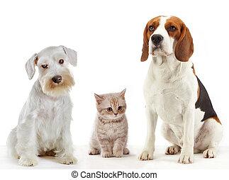 Tres animales domésticos gato y perros