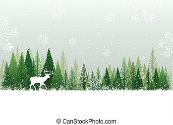 Un bosque de nieve