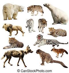 Un grupo de mamíferos depredadores sobre blancos