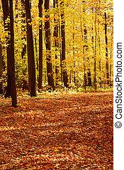 Un paisaje forestal de otoño