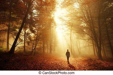 Un paseo en una luz impresionante en el bosque de otoño
