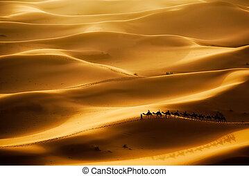 Una caravana de camellos