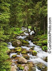 Una corriente forestal en montañas tatra