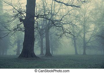 Una foto de un árbol gigante en el bosque