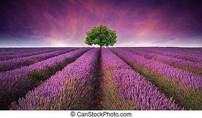 Una hermosa imagen del campo de lavanda, un paisaje de sol de verano con un solo árbol en el horizonte contrastando colores