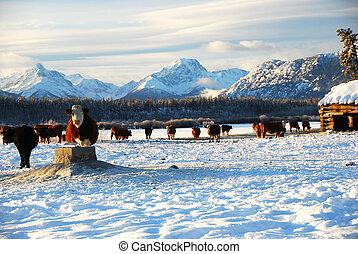 Vacas en el rancho