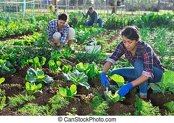 vegetal, plantas, jardín, cuidado, trabajadores