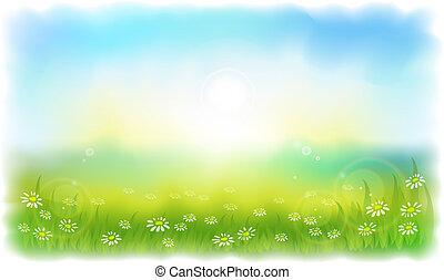 verano, pradera, daisies., sun-drenched, soleado, outdoors., día