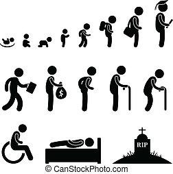vida, viejo, humano, estudiante, niño, bebé