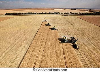 Vista aérea de la cosecha