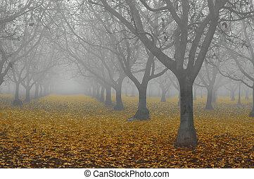 Walnut Grove en la niebla