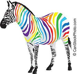 zebra., diferente, tiras, colors.